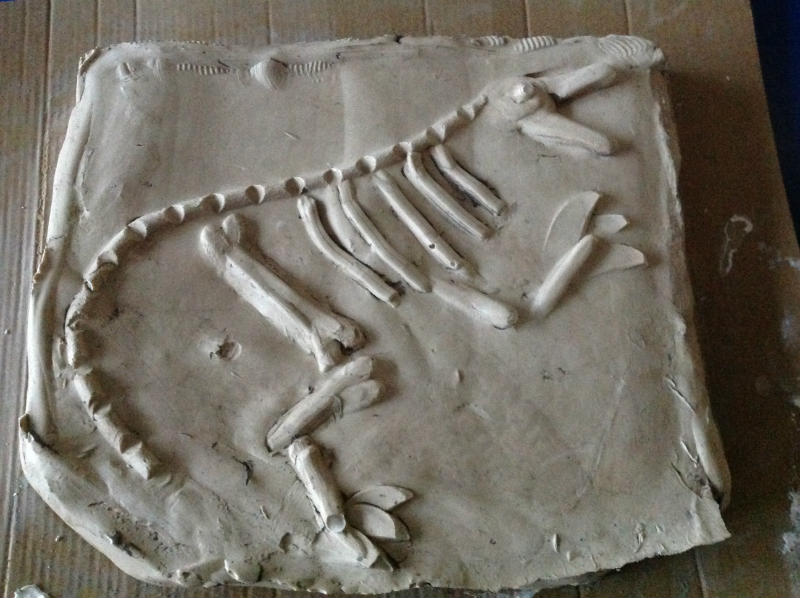 This is the finished dinosaur fossil.